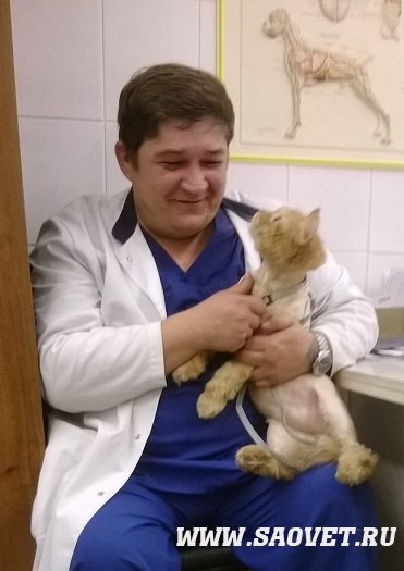 ветеринарный врач вакансии архангельская область