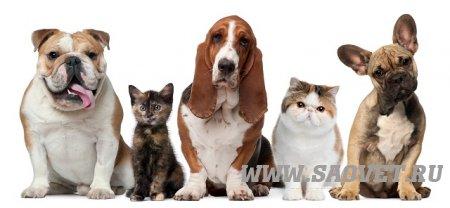 Диспансеризация животных