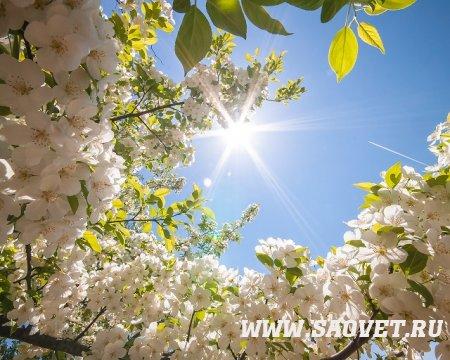 Наступила весна, зажурчали ручьи .....
