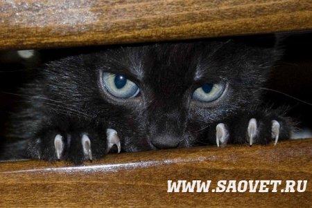 Злая кошка!