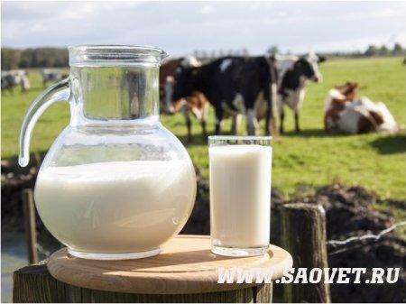 Как снизить риск отравления сырым молоком?